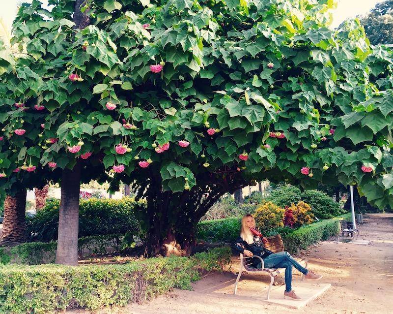 Парк с тропическими растениями в Малаге